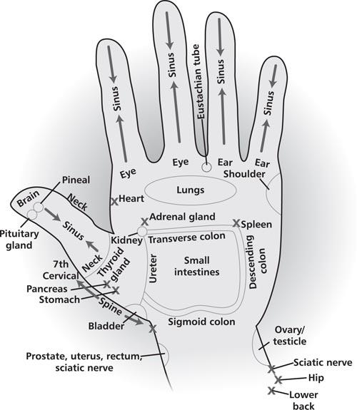 How to Apply Reflexology to the Hands