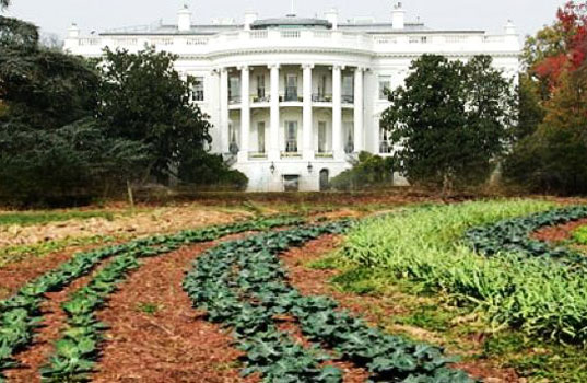 white-house-organic-farm