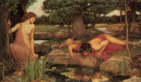 Narcissus blog