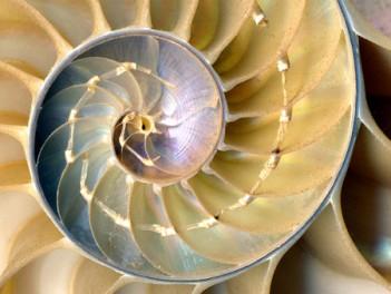 shell.... nautilus_shell_cross_section