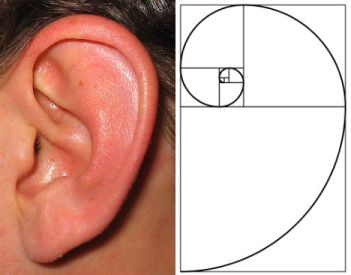shells ear