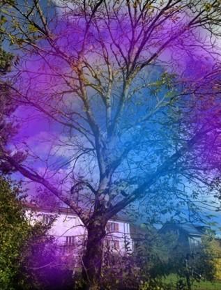 tree aura 1