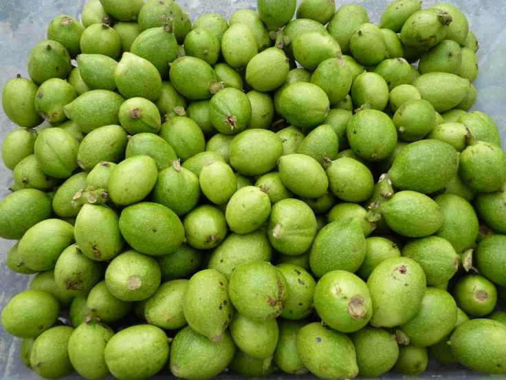 Walnuts green