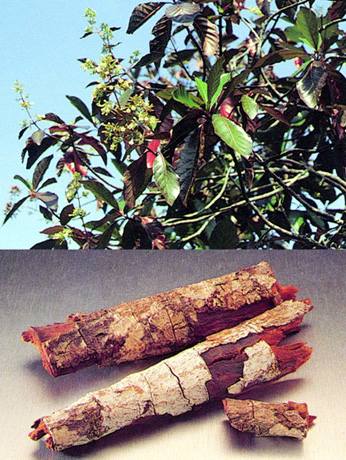 CHINA_OFFICINALIS
