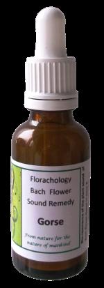 Bach-flower-Gorse