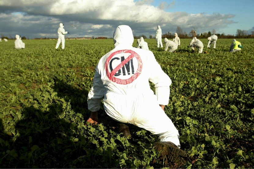 anti_gm_demonstrators_in_an_oilseed_rape_crop