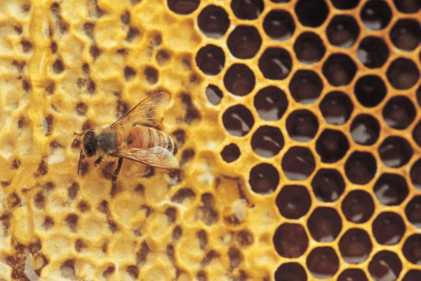 bee-on-honeycomb-e1482242704853