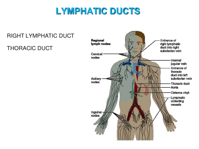 lymph-and-lymphatic-system-22-638