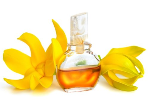 ylang-essential-oil