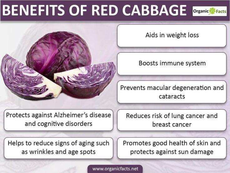 redcabbageinfo