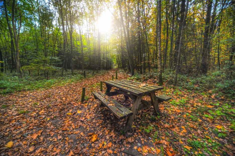 bench-forest-nature-park-630758.jpeg