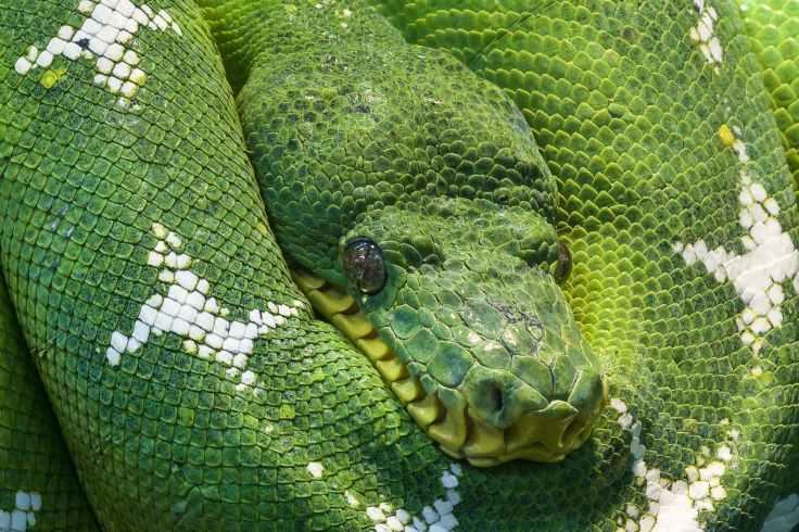 snake-python-animal-scale-45843.jpeg